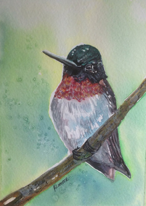 hummingbird watercolor maine