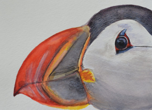 maine puffin watercolor
