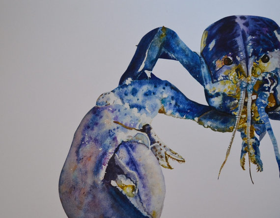 Rare Blue Lobster Print